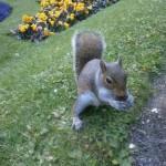 1. TRIO - Squirrel from Scarborough